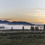 Yellowstone's Hayden Valley