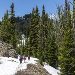 Yellowstone: naar Mt Washburn