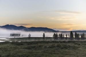 Yellowstone's Hayden Valley