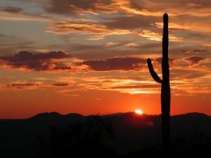 Sonorawoestijn