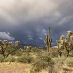 De 'groene' Sonorawoestijn bij Phoenix