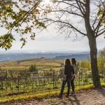 Blik op de rieslingwijngaarden van het Rheingau