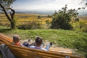Tussen de riesling-wijngaarden langs de Klostersteig
